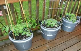 container gardening for beginners. Vegetable Container Garden Idea Gardening For Beginners O