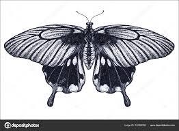 красивая бабочка татуировка эскиз тропические бабочки Papilio