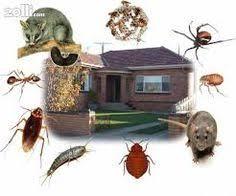 34 شركة مكافحة حشرات بالرياض ideas | rágcsálók
