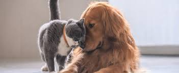 If you are looking for dog insurance in the uk you have come to the right place. Pet Insurance For Any Budget Award Winning Provider
