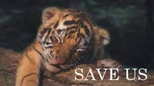 west bengal to sell excess wild animals in forests west bengal to sell excess wild animals in forests