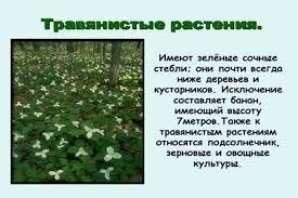 Конспект открытого урока по теме Что мы знаем о растениях   К какой группе растений можно отнести ромашку Ромашка относится к травянистым растениям Охарактеризуйте травянистые растения