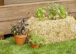 straw bale vegetable garden better