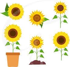 chain clipart sunflower chain
