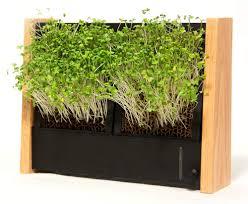 ecoqube frame for growing an indoor vegetable garden