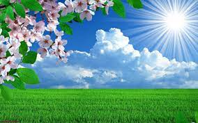 Spring Flowers Nature Landscape HD ...
