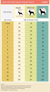 Bond And Co Dog Size Chart How To Calculate Your Dogs Age Dogs Dog Age Chart Dog Ages