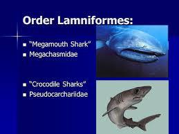 "class chondrichthyes ""cartilaginous fish"" kingdom ani a ppt  31 order"