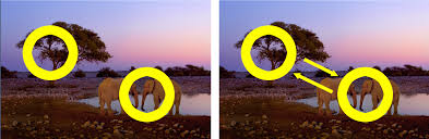Image result for Asymmetric equilibrium of photography