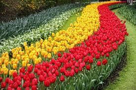 great flower garden ideas