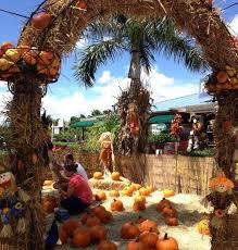flamingo road nursery is excited to host our annual fall festival each year from the end of september to the first week of november