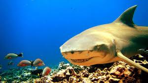 creepiest shark species