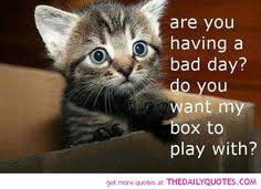 cute animals quotes. Interesting Cute Cute Animal Quotes  Google Search Inside Cute Animals Quotes R