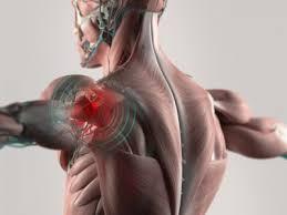 「肩関節内旋と主動作筋」の画像検索結果