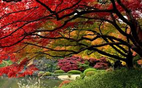 Small Picture Beautiful gardens in Japan Pixdaus