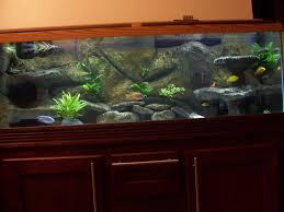full size of fish tank beautiful background diy images ideas aquarium check 50 beautiful fish tank