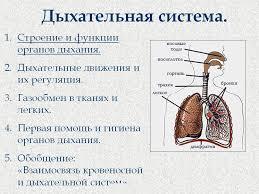 Значение дыхания Строение органов дыхания Функции дыхания