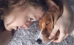 13 signs your dog is dying how to know