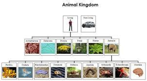 Animal Kingdom Charts Cards