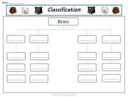 Bear Classification Chart Bears Graphic Organizers Kwl Chart Venn Diagrams Classifying For Common Core