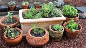 Kitchen Gardening Tips How To Plant A Culinary Herb Garden Diy Kitchen Garden Youtube