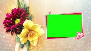 best golden colour beautiful flowers background free video background dmx hd bg 318