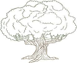 Click the simple christams tree coloring pages to view printable version or color it online (compatible with ipad and android tablets). Free Printable Tree Coloring Pages For Kids