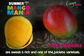 Mango Usa Size Chart Opinion Foretelling The Mexican Mango Season End