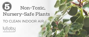 ... 2016 non-toxic nursery-safe plants - lullaby paints