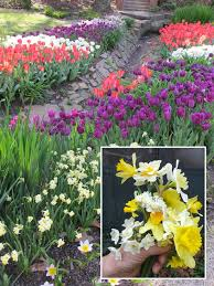 whether you want m of spring color or to collect heirloom bulbs to share all are easily planted in the fall