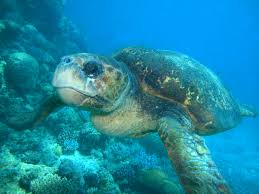 destruction marine life essay dugong oceana destruction marine life essay