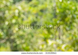 blurred outdoor backgrounds. Unique Outdoor Blurred Of Nature Outdoor Background To Outdoor Backgrounds B