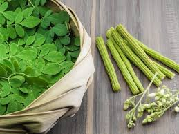benefits uses of moringa oleifera