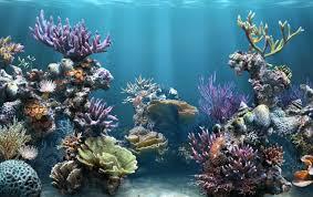 Fish Tank Water Wallpapers Fish Tank Water Stock Photos