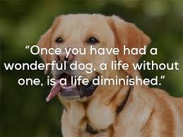 Dog Mans Best Friend Quotes