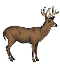 Deer Vitals Chart Hog Hunting Shot Placement Dont Make This Common Deer