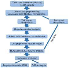 Prognostic 4 Lncrna Based Risk Model Predicts Survival Time