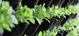 37 gardening container ideas