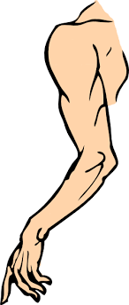 Free Arm Cliparts, Download Free Arm Cliparts png images, Free ClipArts on Clipart Library