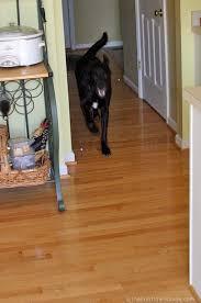 tenor dog running on hardwood floor jpg