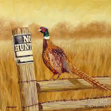 pheasant painting no hunting pheasant by tom chapman