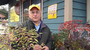 Fall Landscaping Fall Landscaping Ideas Alternatives To The Burning Bush Youtube