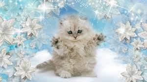 1921x1080 px, baby, cat, kitten ...