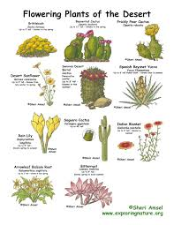 desert plants with names. Brilliant Names On Desert Plants With Names