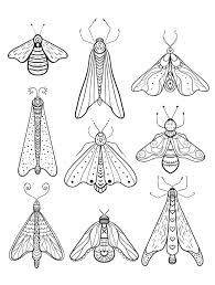 Insect Free Downloadable Adult Coloring Pages Pic Paper Art