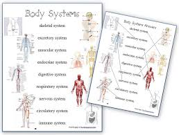 Small Picture Human Body Systems Worksheets Homeschool Den
