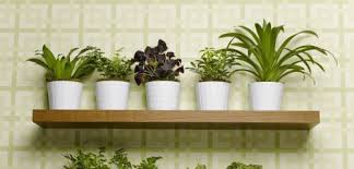 Scopri tutte le piante da siepe che abbiamo in vendita, piante di qualità per la riuscita del vostro spazio verde in giardino o sul balcone di casa. Le 7 Piante Che Aiutano A Depurare La Casa Green It