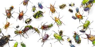 Identifying A Bug Vs Insect