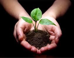 Résultats de recherche d'images pour «soil»