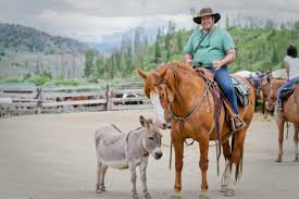 petey is the c lazy u ranch mascot but he has another even more important job he protects our horses from predators he also occasionally moonlights at